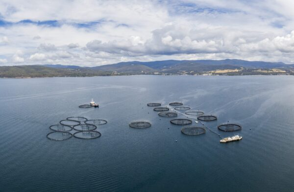 Union Pushes Back Against Environment Group's Claims Against Tasmania's Salmon Industry